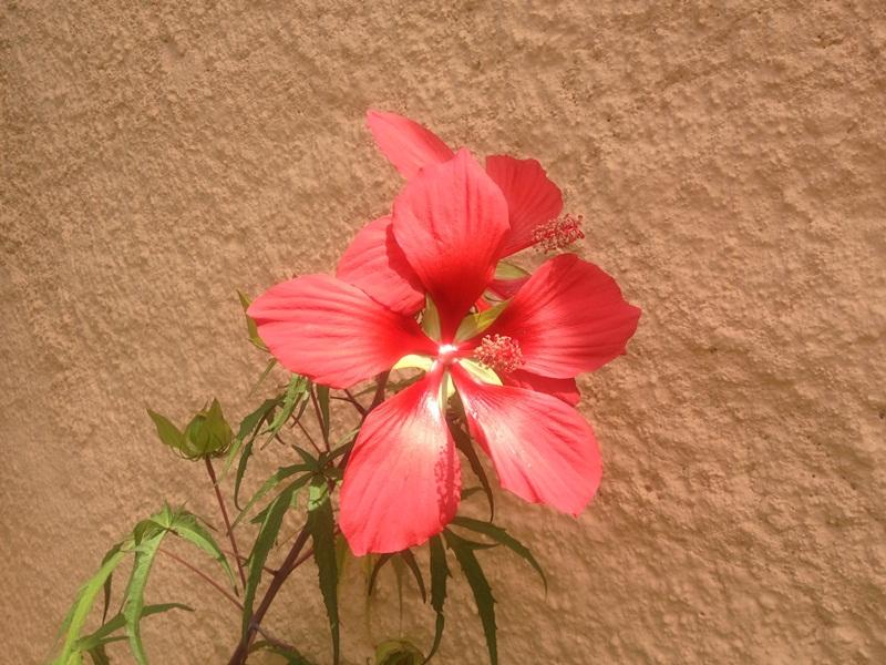 Tuin 13 bloemenpracht